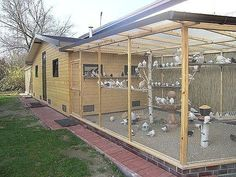 """Chicken Coop / Avery for you breeders very nice large one with """"high"""" safe perches in case a predator chews a way in! Chicken Coop Run, Chicken Cages, Backyard Chicken Coops, Building A Chicken Coop, Chickens Backyard, Chicken Coop Designs, Pigeon Loft Design, Pigeon Cage, Bird Aviary"""