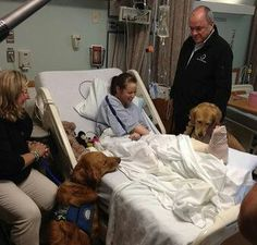 Therapy dogs visiting victims of the Boston bombs.