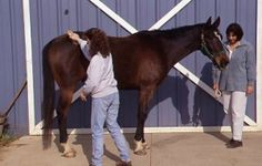How to speed up the shedding process of your horse: Baby oil, who knew!?!