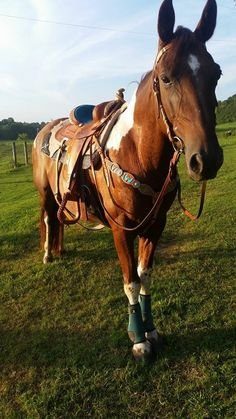 "Tennessee Walking Horse ""Show of the Morning"""