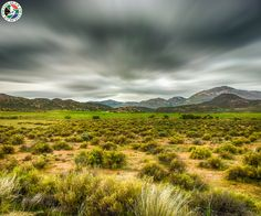 Cheap Flights to South Africa Grass Field, Cheap Flights, South Africa, Fields, Mountains, Nature, Travel, Viajes, Low Fare Flights