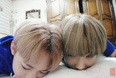 Chenle & Jisung