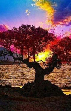 Color! Tree! Ocean! I'm in love with this pic!
