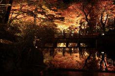 美麗な紅葉ライトアップが魅力的!愛知県「岩谷堂公園」で都市近郊の自然と紅葉を楽しもう!