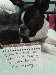 Charlie believes baby should always be awake when mommy is busy! Funny Dogs, Cute Dogs, Funny Animals, Cute Animals, Animal Memes, Boston Terrier Love, Boston Terriers, Cat Shaming, Dogs And Puppies