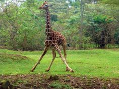 Nairobi National Park - Wild Life Safari