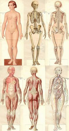 Anatomie modèle femme (1937) Hey! How did they get my picture when I wasn't even born yet??!!