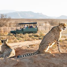 """Countless travelers planning their first visit to South Africa reach out to me for advice, telling me they want to """"do Cape Town and add on a quick safari ..."""