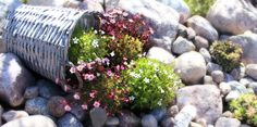 Rock garden / kivikkopuutarha Projects To Try, Yard, Gardening, Dreams, Rock, Plants, House, Patio, Home