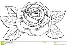 Flower Drawing Rose How To Draw A Rose Drawings. How To Draw Roses For Kids. The