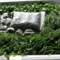 Все секреты длительного хранения зелени (плюс заморозка) — Полезные советы