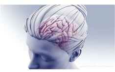Ce rapport spécial de l'American Heart Association (AHA) et de l'American Stroke Association Stroke Council propose, dans la revue Stroke un état des lieux du risque évoqué de thrombose veineuse cérébrale associé au vaccin Janssen, avec une conclusion de fond : le risque de caillots sanguins au cerveau est 8 à 10 fois plus élevé avec ou après une (...) Transient Ischemic Attack, Mri Brain, Stroke Association, Body Of Evidence, Drug Design, Mind Diet, American Heart Association, National Institutes Of Health, High Risk