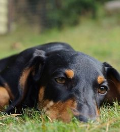 ❤️Next time I will not miss that ol squirrel. doxie