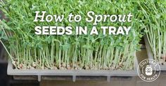 How To Sprout Seeds In A Tray