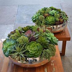 #mulpix Jardins de suculentas para compor uma mesa de jantar... Ficou…