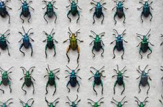 Uniform Bug Grids via @Home Barn