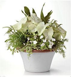 WHITE AND GREEN                               cast-iron plant, 'Moonlight' caladiums, 'Dazzler White' impatiens, silver ribbon fern, asparagus fern, Korean rock fern, and variegated creeping figs             FROM SOUTHERN LIVING