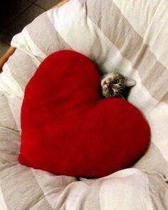 Awww, love.