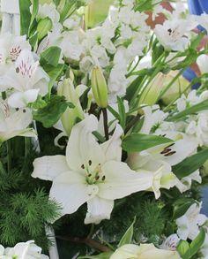 Flores Maria Costa Peuser