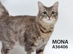 Adopted! Mona has found her forever home!