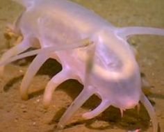 25 Most Amazing and Unusual Animals On Earth