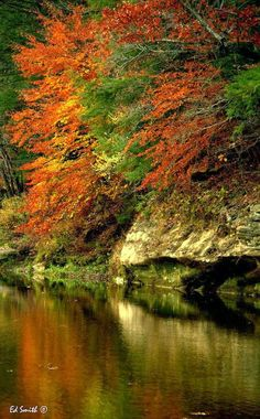 10 amazing autumn photographs - beautiful time of the year http://www.discoverlakelanier.com