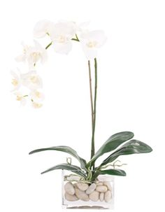 Natural Decorations, Inc. - Orchid Phalaenopsis Cream White | Glass Cube