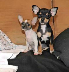 Mila and lila