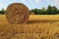 2013-08-18: the last straw