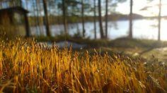 """Auringon taikaa ©Kaitsu: """"Kevään ensimmäinen vierailu mökille maaliskuussa 2015. Aurinko oli jo sulattanut etelärinteen kokonaan vaikka järven jää kantoi vielä hyvin. Iltapäivän pehmeä auringonvalo sai uuden kasvillisuuden loistamaan kauniisti."""