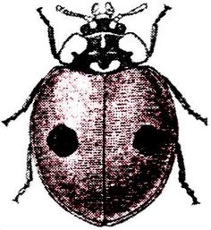 1a-ladybug-gfairy2b.jpg (347×378)