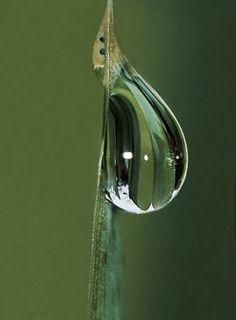 Dew Drops, Rain Drops, Water Photography, Macro Photography, Bokeh, Photo Drop, Drip Art, Water Drip, Forest Flowers