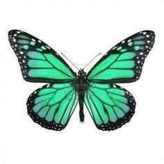 Imprimer le dessin en couleurs : Animaux - Insectes - Papillon numéro 158552