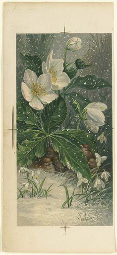 Birds Beneath White Flowers in Winter | Flickr - Photo Sharing!
