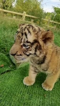 Cute Wild Animals, Baby Animals Pictures, Super Cute Animals, Cute Animal Videos, Cute Little Animals, Cute Animal Pictures, Animals Beautiful, Funny Cute Cats, Cute Cats And Kittens