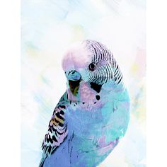 Sky Blue Budgie Canvas Wall Art - T&W Art Collection - T&W Art Collection