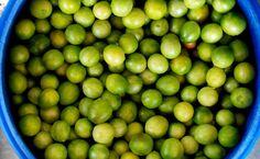 NG - Fruta mais emblemática da Caatinga nordestina, o umbu entrou na lista de alimentos ameaçados de extinção elaborada pela fundação Slow F...