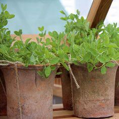 Viete, ktoré rastliny vás doma ochránia pred škodlivými látkami? | Môjdom.sk Planter Pots