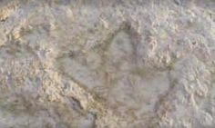 Dinosaur tracks found on beach.
