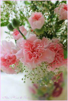 Carnations Soft & Delicate / Aiken House & Gardens