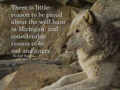 Wolf Conservation Center Photo
