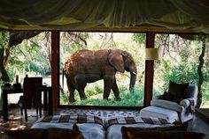 honeymoon, lodg, african safari, south africa, dream vacations, hotel, game, place, bucket lists