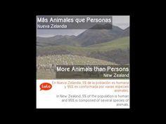 Animales en Nueva Zelandia = Animals in New Zealand | Aprende Inglés = Learn Spanish by LuLo - YouTube