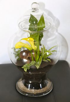 Beautiful Arum Lilly in a Glass Candy Jar - Closed Terrarium Terrarium Centerpiece, Terrarium Ideas, Centerpieces, Tropical Terrariums, Glass Candy Jars, Vase, Shapes, Creative, Plants