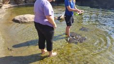 Feeding stingrays and turtles awesome day out with LorraineQ