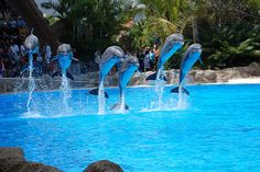dolphins jumping at a show