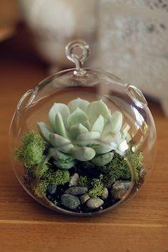 Glass globe terrarium