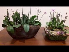 Супер посадка 14 белых орхидей /Закрытая система/Часть 2 - YouTube