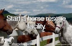 Start A Horse Rescue Facility