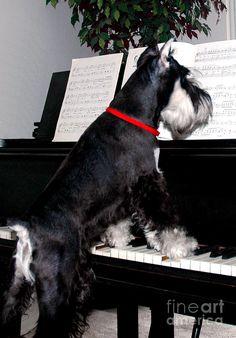 The Piano Lesson Photograph